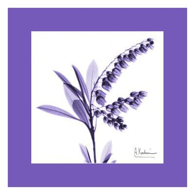 Lily Of The Valley Bordered