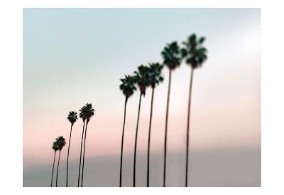 Rosey Palms