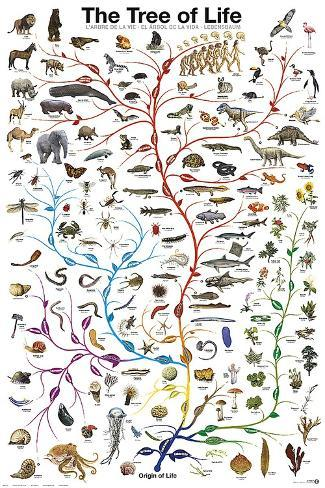 Evolution The Tree of Life Biology Science Chart Education Print Poster 24x36