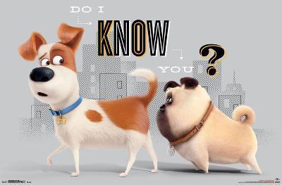 Secret Life Of Pets- Do I Know You?