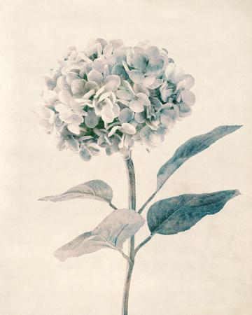 Ethereal Floral III