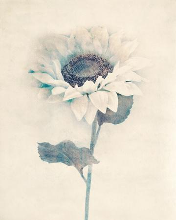 Ethereal Floral IV