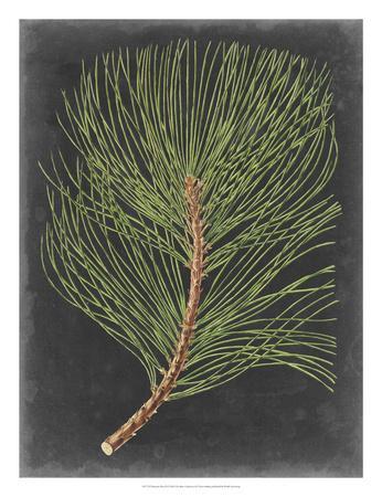 Dramatic Pine III