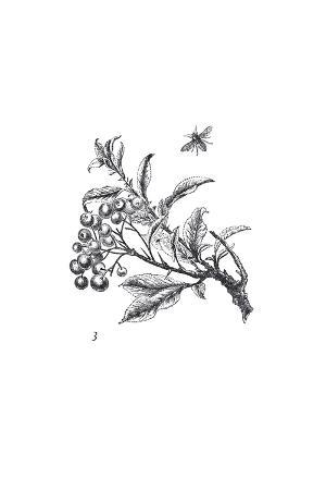 Orchard Flowers II