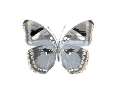Butterfly in Grey I