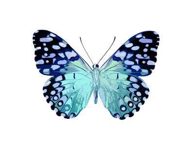 Butterfly in Metallic II