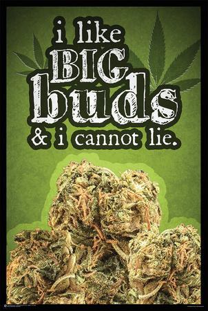 I Like Big Buds