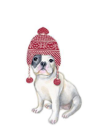 Dog in Red Winter Hat