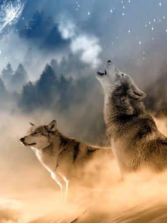 Fantasy Wolf Wolves Animal