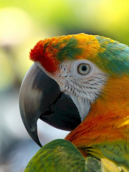 Colorful Bird Parrot Animal Poster Wonderful Dream Allposters Com