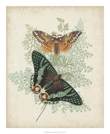 Butterflies & Ferns I