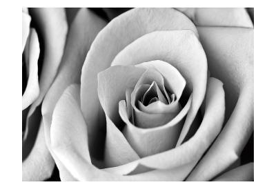 White Noise Rose 2