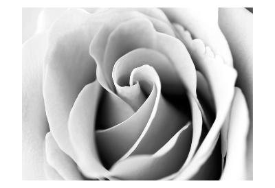 White Noise Rose 3
