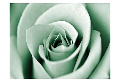 Jade Rose