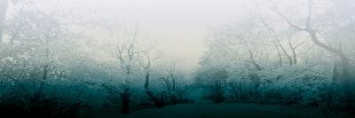 Teal Woods