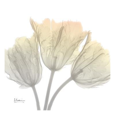 Sunday Morning Tulips