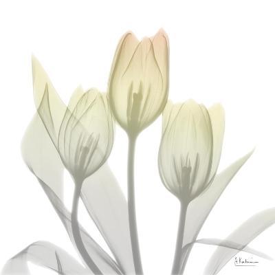 Sunday Morning Tulips Two