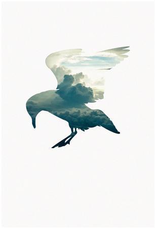 Cloud Gull