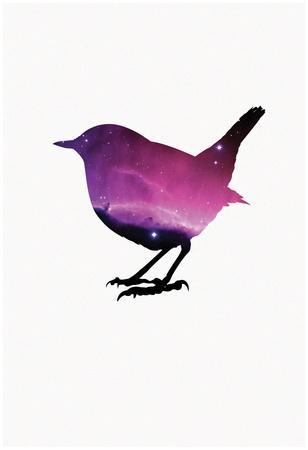 Robin Nebula