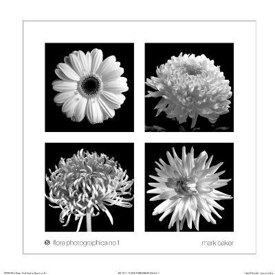 Flora Photographica No. 1