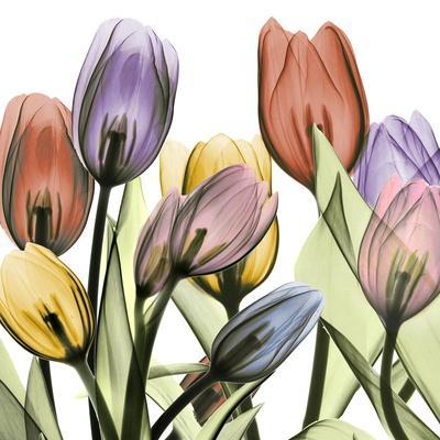 Tulipscape 2