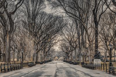 Assaf Frank- Central Park