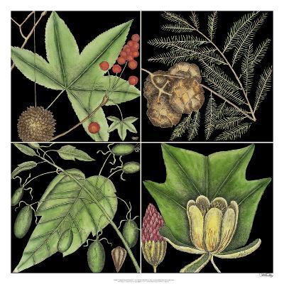 Graphic Botanical Grid III
