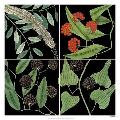 Graphic Botanical Grid IV