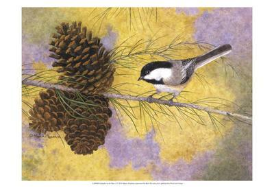 Chickadee in the Pines II