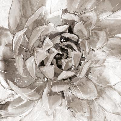 Cereus Aeonium - Fawn