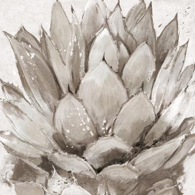 Cereus Echeveria - Fawn