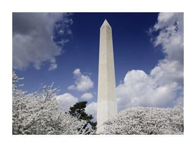Washington Monument and cherry trees, Washington, D.C.