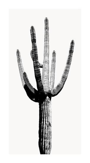 Saguaro Black & White I Giclee Print by Mia Jensen at