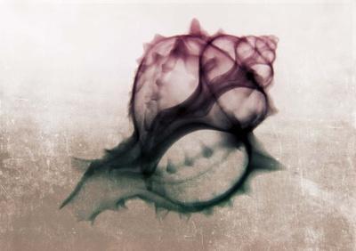 Ombre Sea Shell X-Ray
