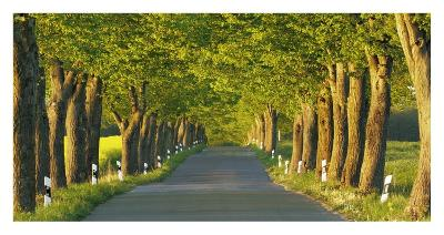Lime tree alley, Mecklenburg Lake District, Germany