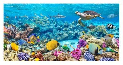 Sea Turtle and fish, Maldivian Coral Reef
