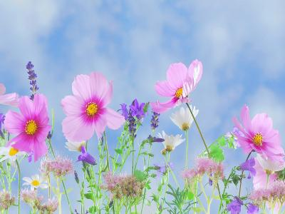 Wildlife Flower