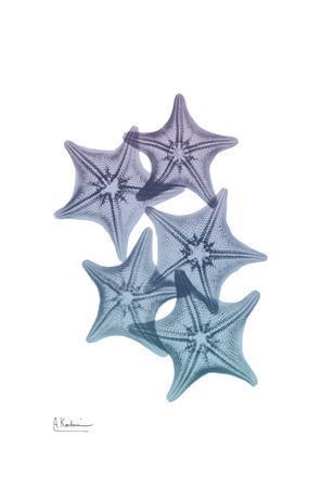 Lavender Splashed Starfish 1