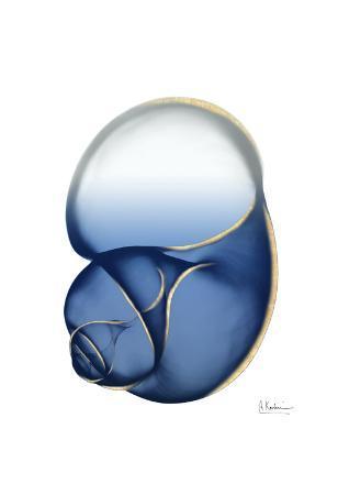 Shimmering Indigo Snail 1