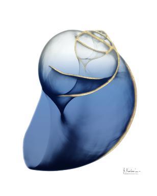 Shimmering Indigo Snail 2
