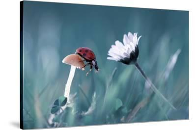 The Story Of The Lady Bug That Tries To Convice The Mushroom To Have A Date With The Beautiful Dais