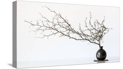 Vase And Branch