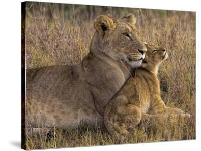 Baby Lion With Mother