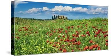 Farm house with cypresses and poppies, Tuscany, Italy