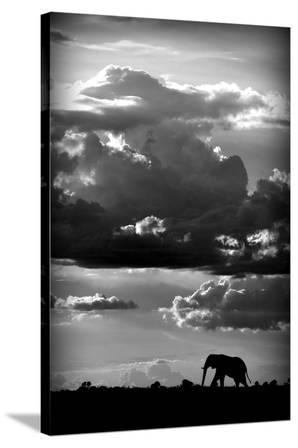 He Walks Under An African Sky