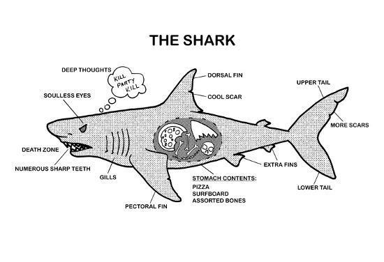 shark anatomy diagram print at allposters com