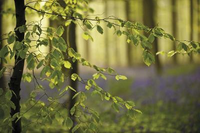 A Woodland Passage