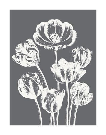 Tulips (Gray & Ivory)