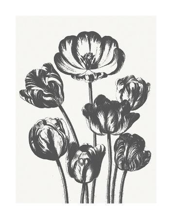 Tulips (Ivory & Ink)