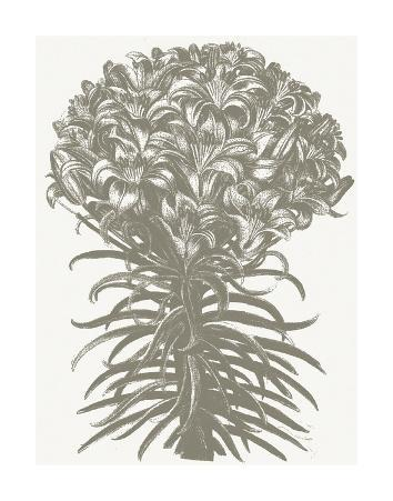 Lilies (Ivory & Burlap)